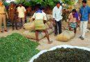 गांजाची शेती : स्थिरतेच्या प्रतीक्षेतला शेती व्यवसाय आणि नशेच्या विळख्यातली तरुणाई