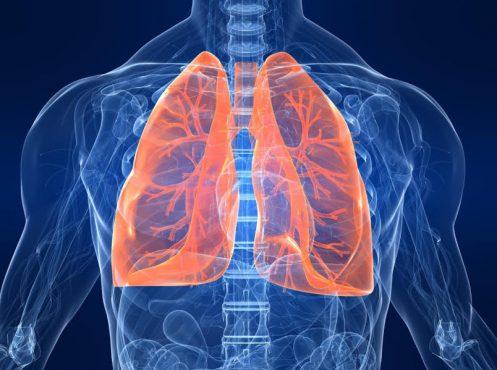 lungs-inmarathi