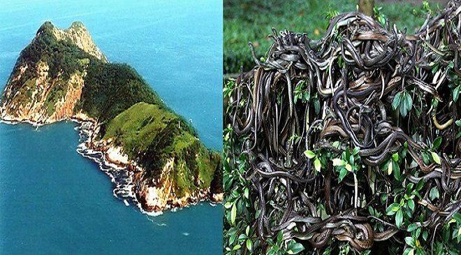 Snake island-inmarathi