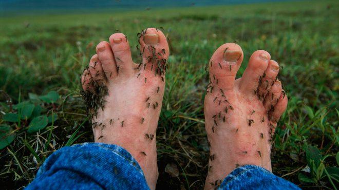 bacterial-feet-inmarathi.jpg