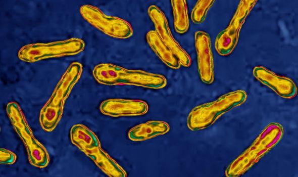 botulism-bacteria-inmarathi04