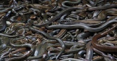 snake-island Feature Inmarathi