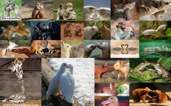 animal-love.inmarathi