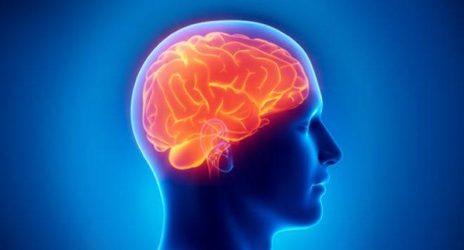 brain-inmarathi