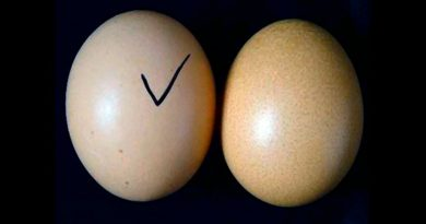 fake-eggs-inmarathi01