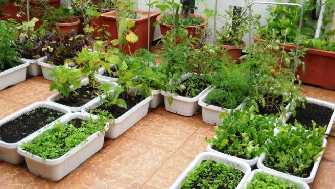 Organics-farm-inmarath