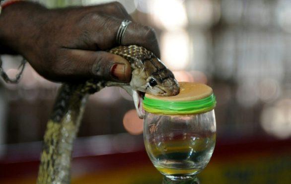 irula snake-inmarathi01