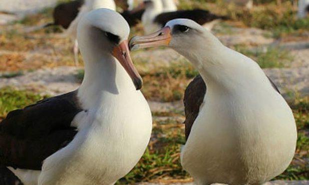 sex-birds-inmarathi