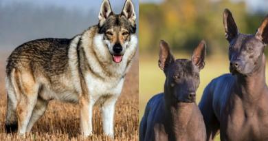 dogs-inmarathi