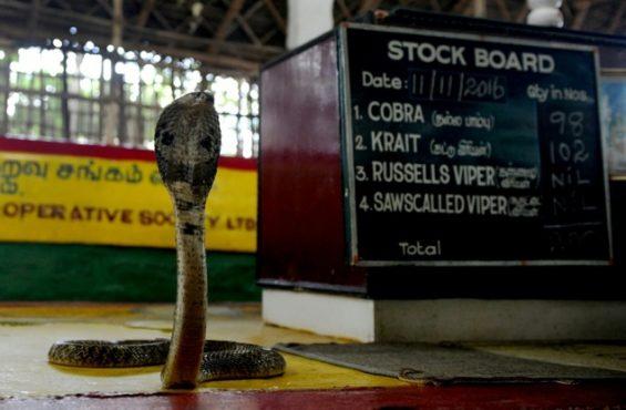 snake-society-inmarathi