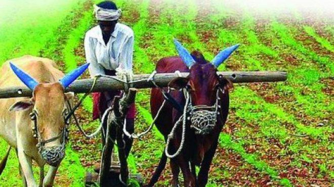 agriculture-inmarathi