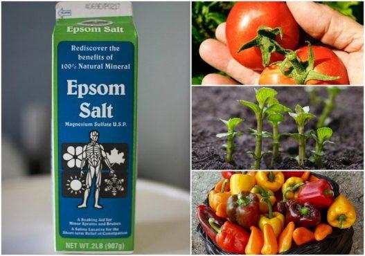 epsom-salt-inmarathi01