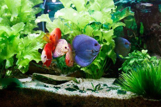 fish-inmarathi