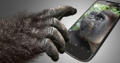gorilla inmarathi