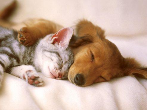 pets-inmarathi