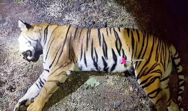 Avni1-inmarathi