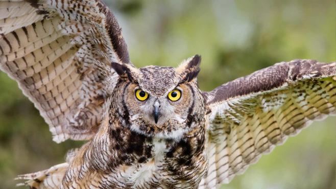 owl-inmarathi