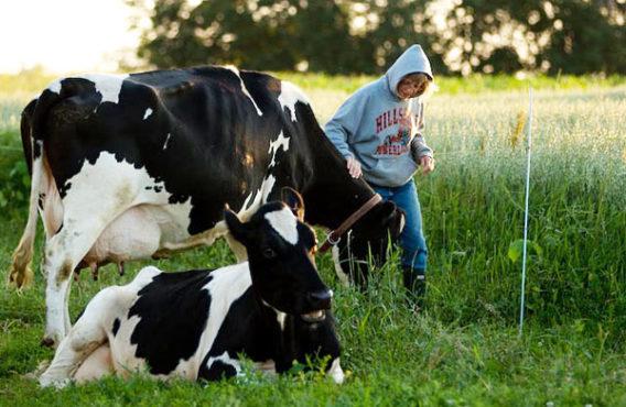 dairy-inmarathi