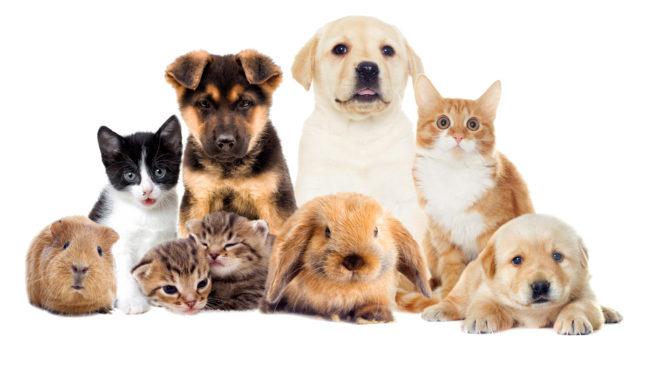 set pets-inmarathi