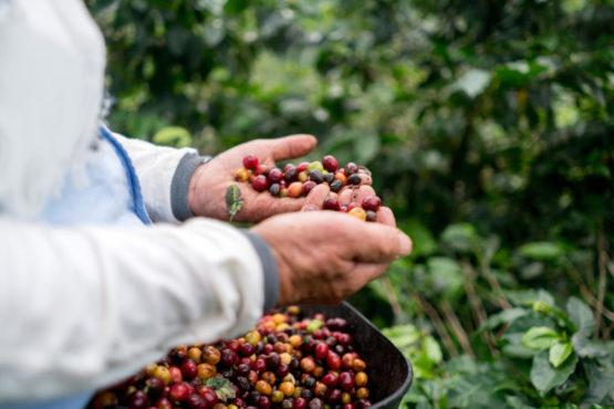 coffee beans inmarathi