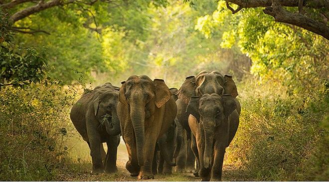elephant-2 inmarathi