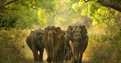 elephant-inmarathi