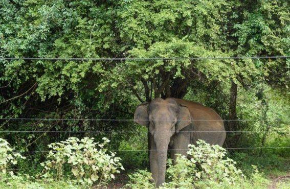 elephant_corridor_inmarathi