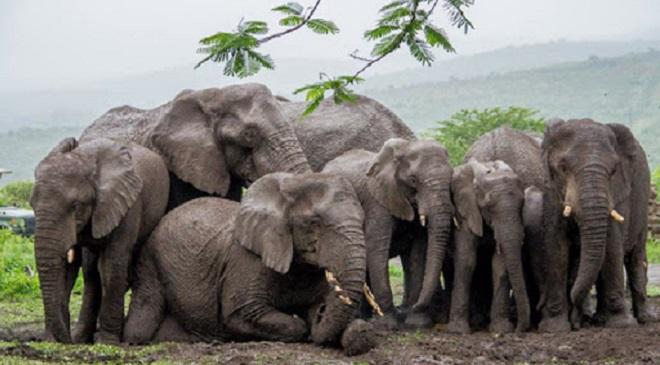 elephants InMarathi