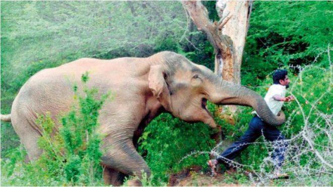 wild-inmarathi