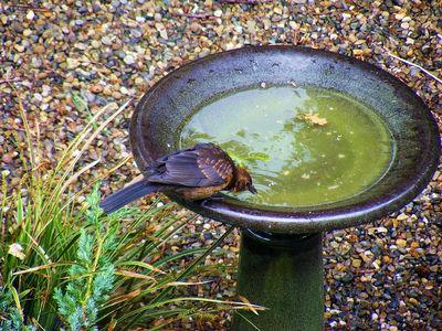 birds water inmarathi