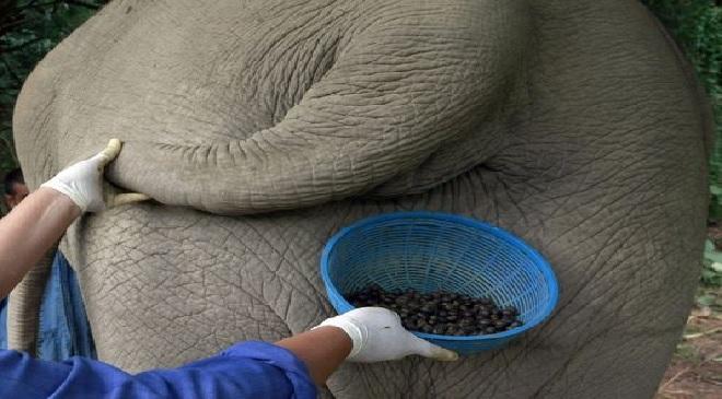 animal coffee inmarathi
