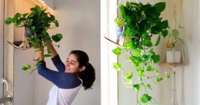 mani plant InMarathi