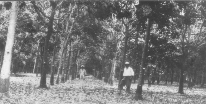 rubber inmarathi
