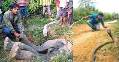aasam elephant inmarathi