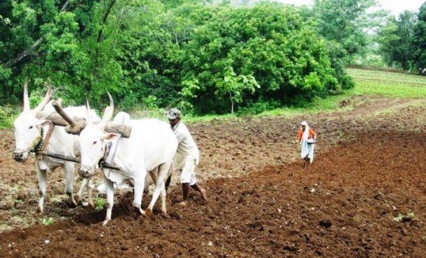farmer_inmarathi