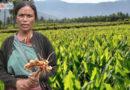 मेघालयातील या शिक्षिकेने लावलेल्या शोधामुळे ९०० शेतकऱ्यांचं उत्पन्न तिप्पट झालंय!