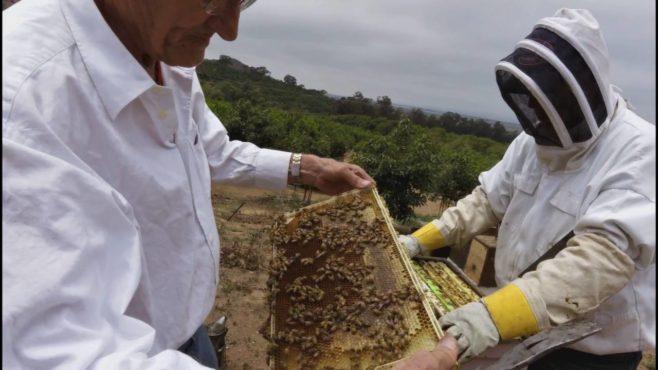 alpha bee inmarathi