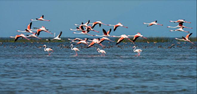 chilka lake inmarathi