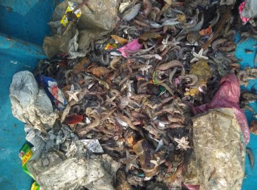 Plastic-waste-fish-sea-650