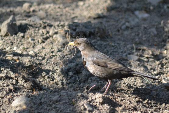 bird inmarathi