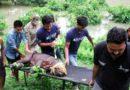 आसामच्या भयंकर प्रलयात वन्य प्राण्यांसाठी मसीहा ठरलेल्या अवलियाची कथा
