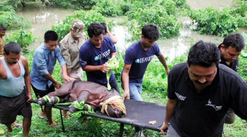 Assam-Kaziranga-rhino-rescued-from-flood-866x487