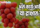 द्राक्षांच्या एका घडाची किंमत तब्बल साडेसात लाख रुपये!