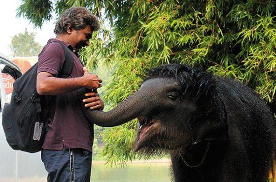 elephant visperor inmarathi