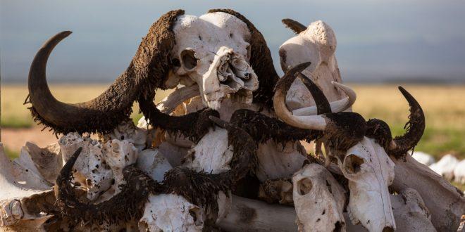 extinction inmarathi