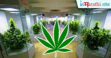 weed inmarathi