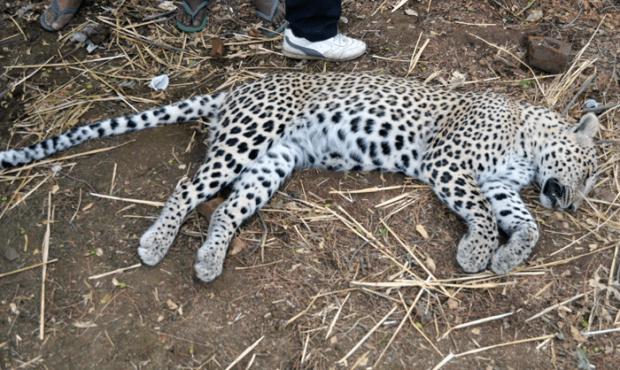 leo died inmarathi