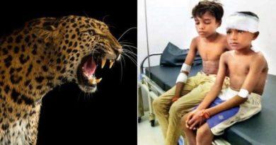 leopard_inmarathi
