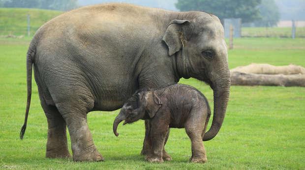 elephant inmarathi