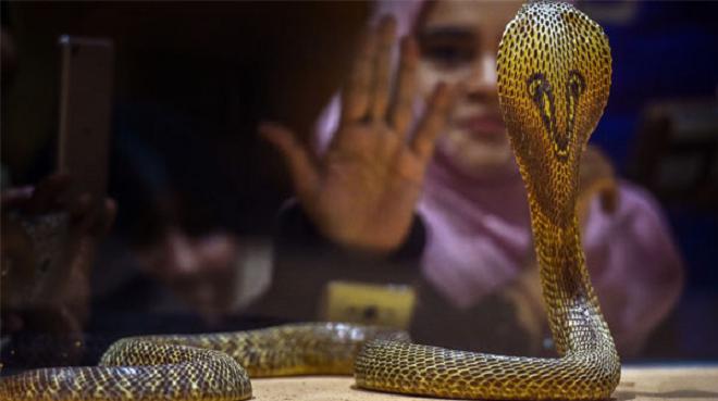 snake inmarathi
